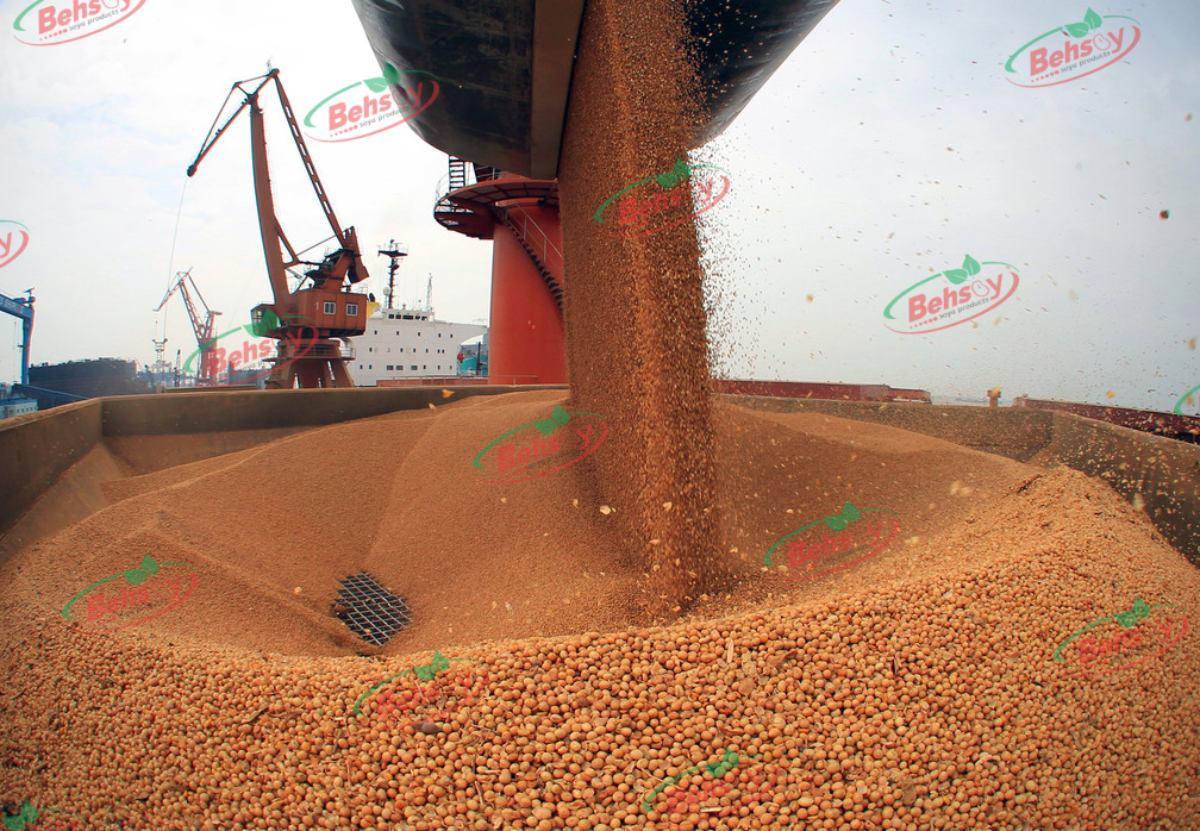 تولید کنندگان و صادر کنندگان سویا